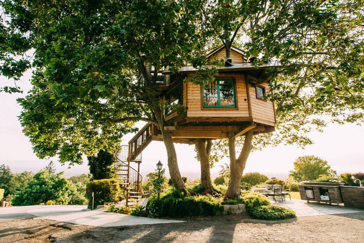 A treehouse sits in sycamore trees on a hill in a vineyard.