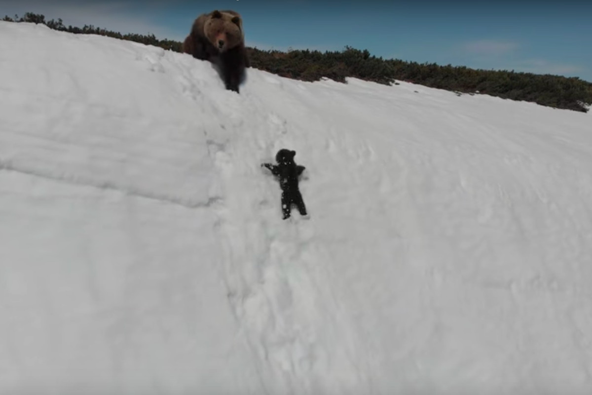 that adorable baby bear clip captures the dark side of wildlife