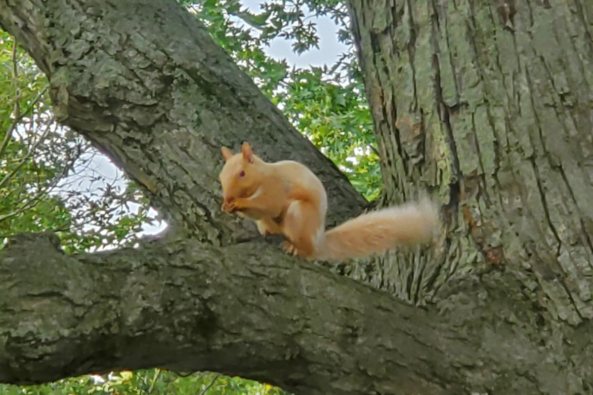 Colorful Christmas In Chicago 2020 Observations come on increasing numbers of black squirrels, the