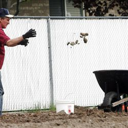 Greg Carlisle tosses rocks into a wheelbarrow as he works in the garden. Members of the Orem Community Church, the Orem 4th Ward of the LDS Church and the Assemblies of God work together Monday, April 30, 2012 to remove rocks from the ground in the garden area. The groups are working together to plant, cultivate, and harvest a garden, the produce from which will be donated to the Food & Care Coalition.