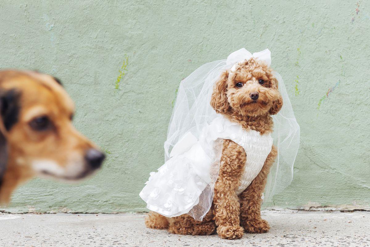 DOG WEDDING DOG WEDDING