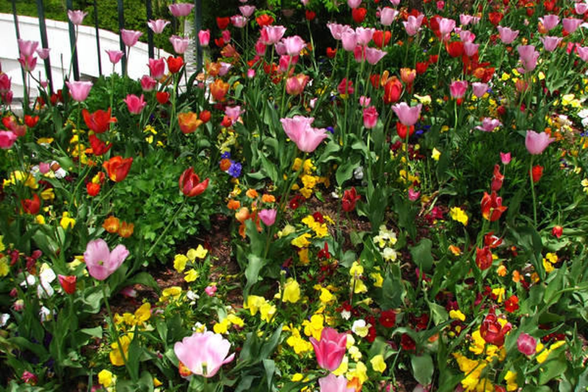 Flowers bloom at the Bountiful Temple.