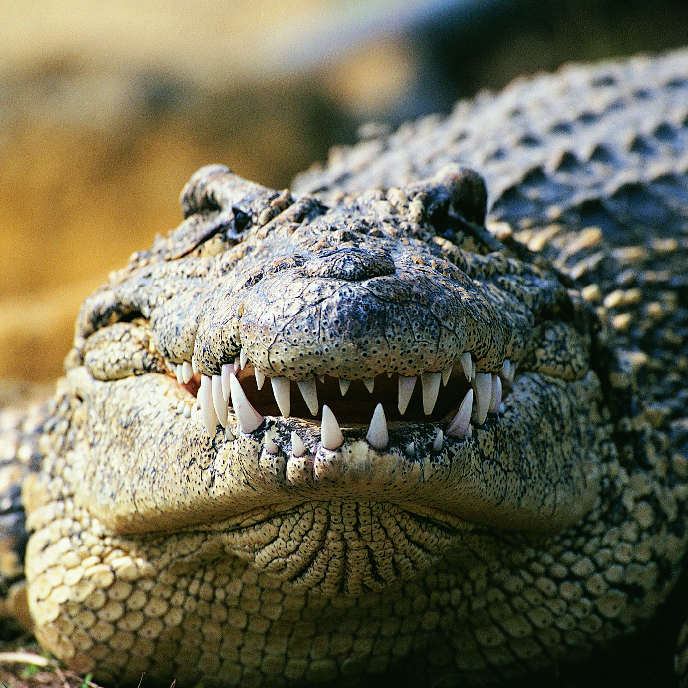 Australian politician thinks same-sex marriage is a distraction from  crocodile attacks - Vox
