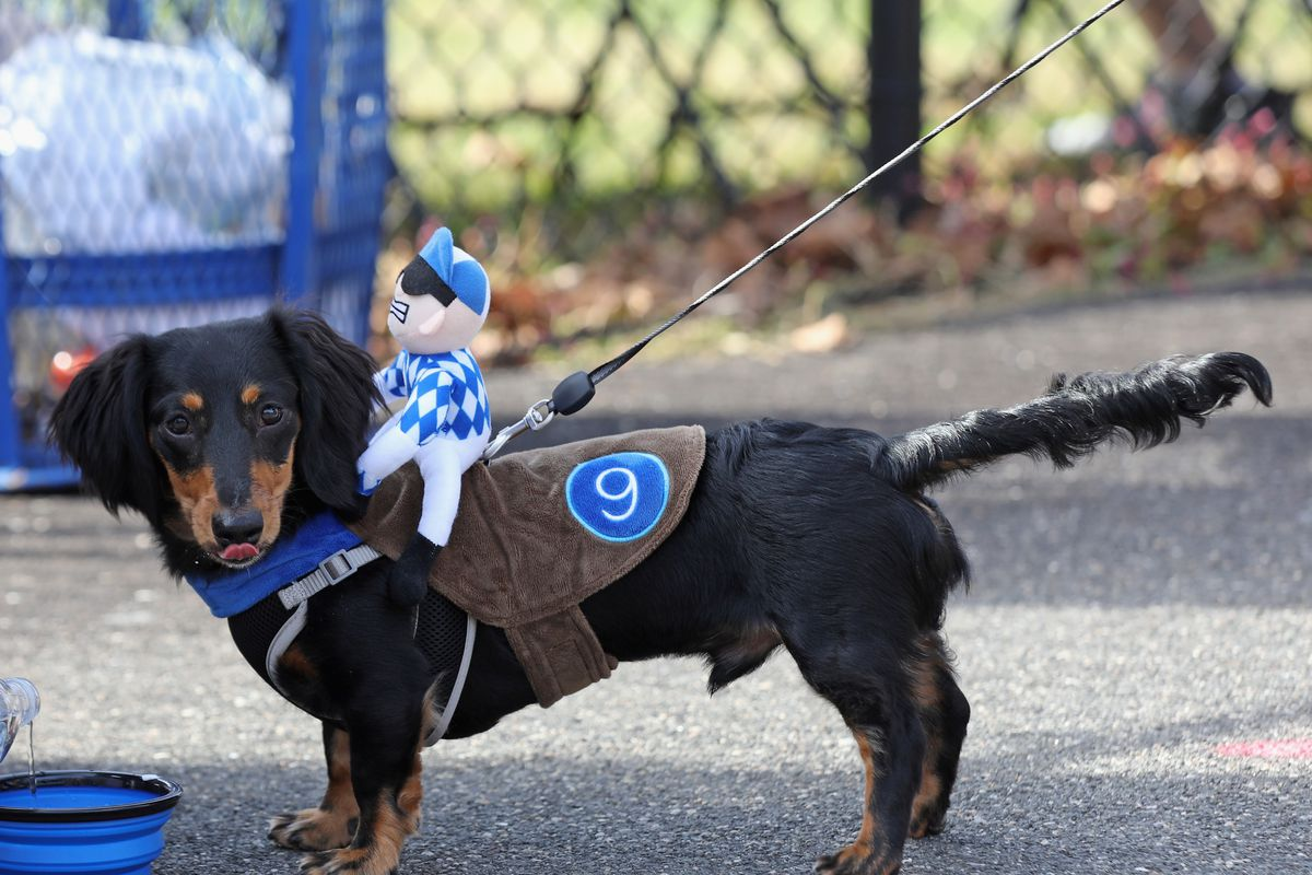 Barkfest Halloween Dog Costume Contest