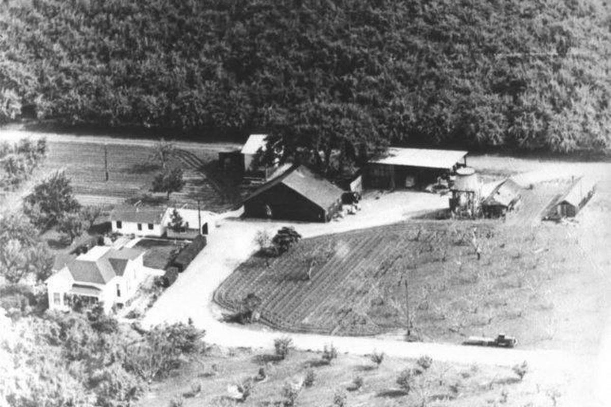 A black and white photo of a large black barn with pine trees behind it and an orchard in front, taken from the air.