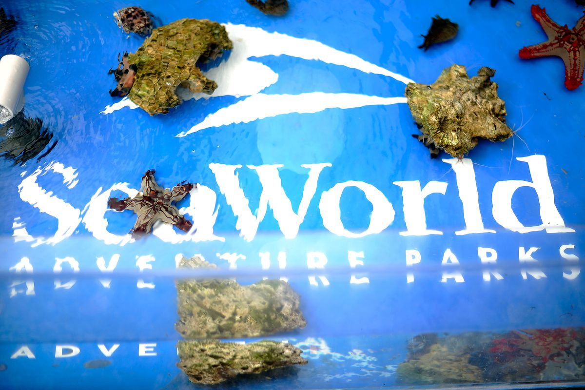 """Premiere Of Sea World San Diego's """"Turtle: The Incredible Journey"""""""