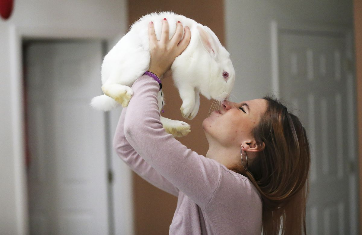 Kelsie Wakefield plays with one of her family's bunnies at her home in Kissimmee, Fla., on Monday Dec 21, 2020.