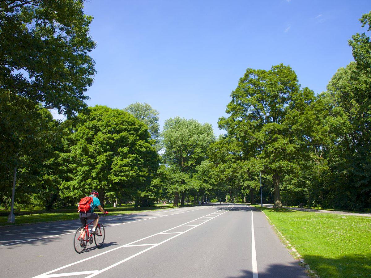 A man bikes in solitude along a carless road in Prospect Park. Vibrant green trees tower over him in the background.