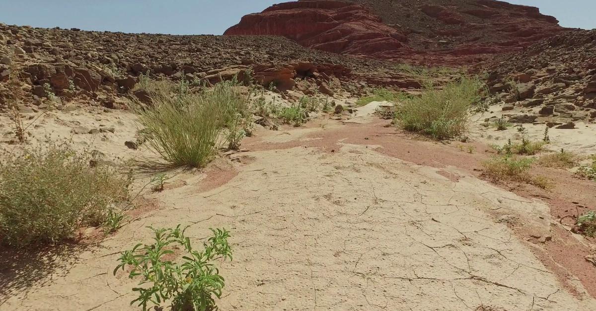 Deserted_land_in_the_cracks_closeupsteady_shot_of_sand_desert_r9dpcscc_thumbnail_full01