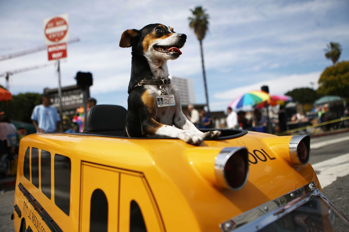 L.A. Archbishop Jose Gomez Leads Annual Blessing Of The Animals