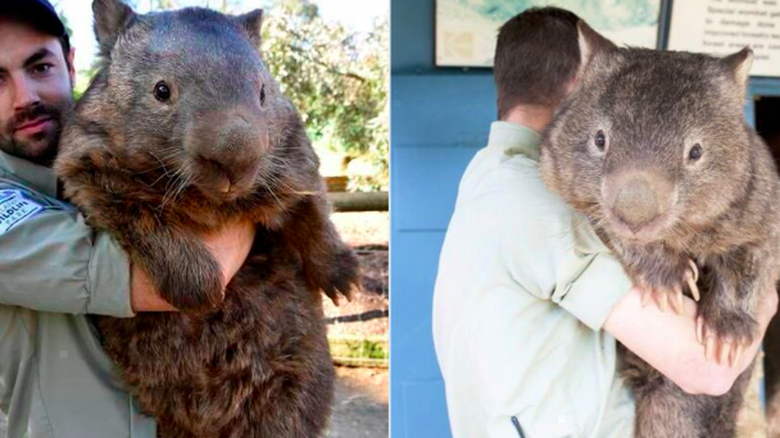 Golf San Antonio >> I saw this giant wombat online and would definitely ...