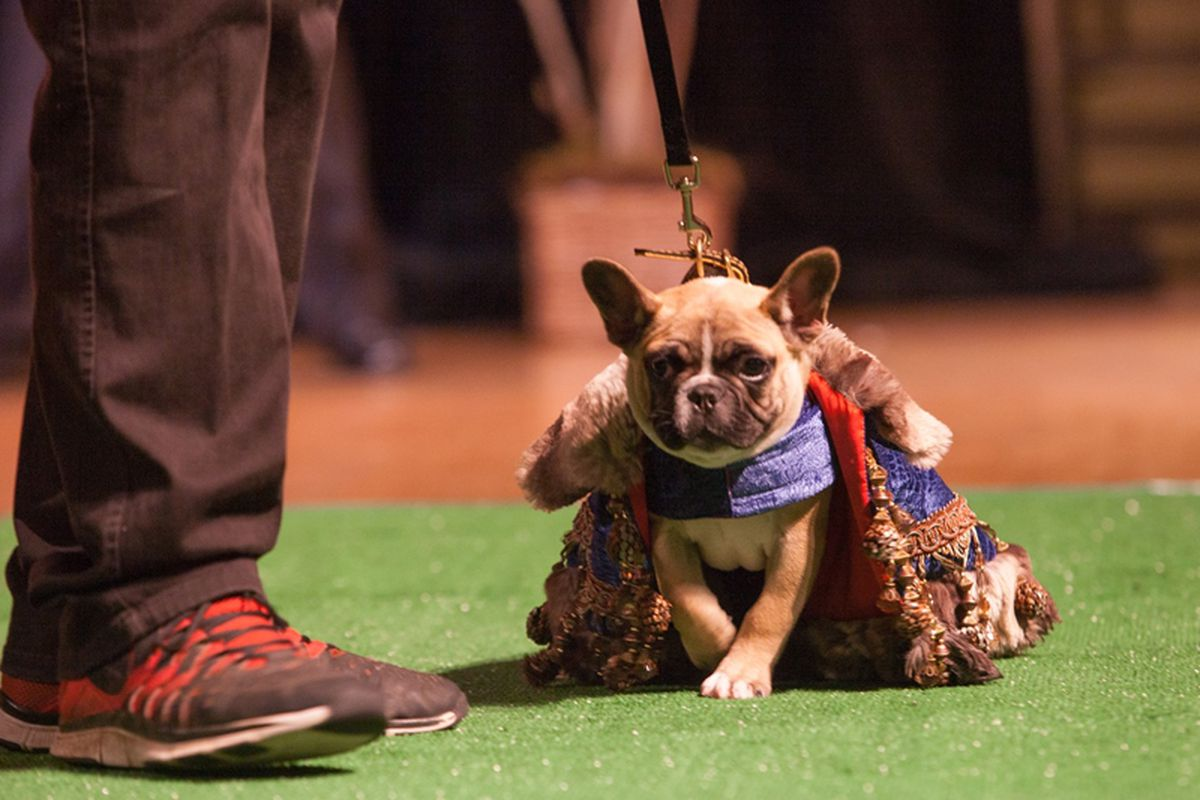 A look from last year's Haute Dog fashion show. Photo: Kira Stackhouse