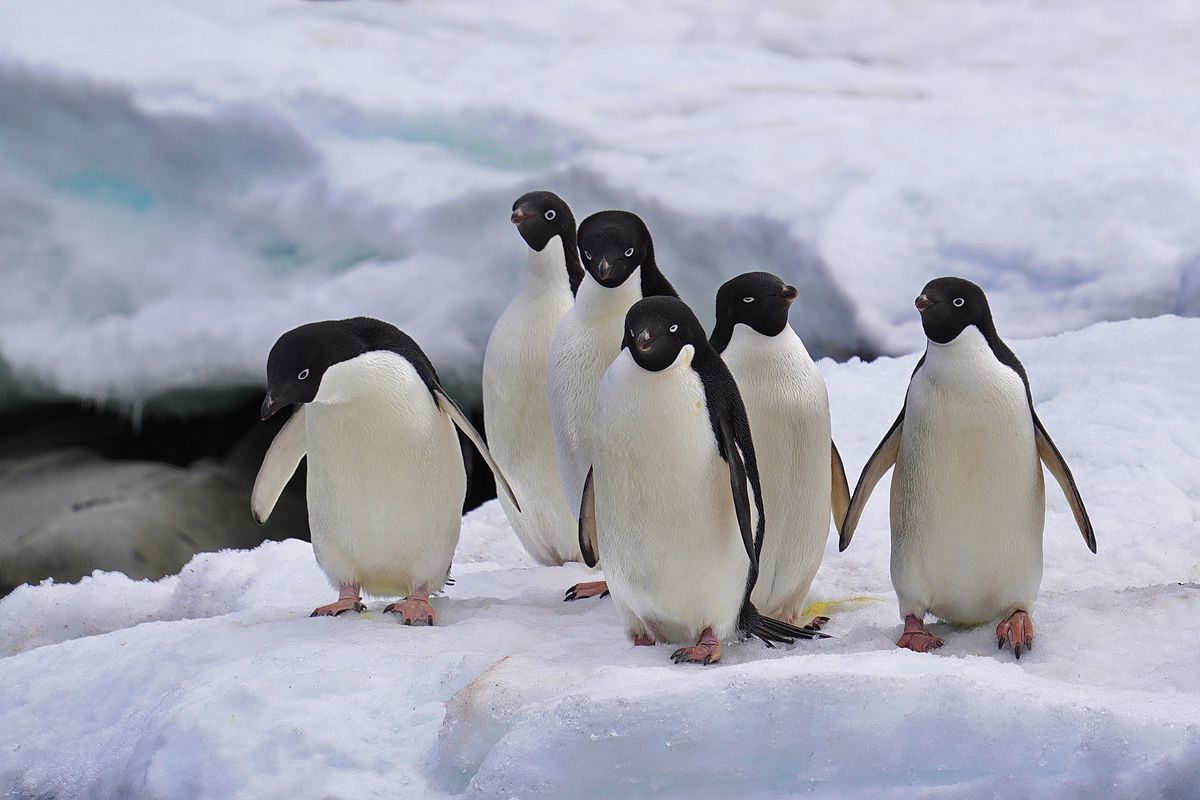 A Visit To The Antarctica