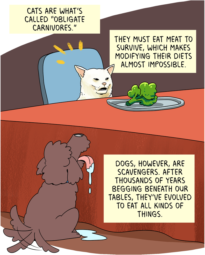 """Cats are what's called """"obligate carnivores."""" They must eat meat to survive, which makes modifying their diets almost impossible. Dogs, however, are scavengers. After thousands of years begging beneath our tables, they've evolved to eat all kinds of things."""