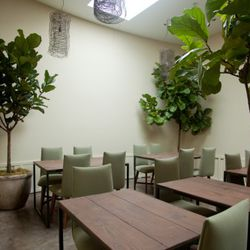 Fig trees create dramatic shading and a connection to nature in the rear dining area.