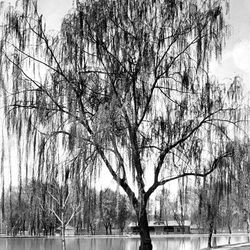 This April 1925 photo of Liberty Park's pond by Sainsbury Photo shows a calm and peaceful setting.