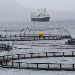 Fish pens float in the water on a Russian Aquaculture PJSC salmon farm, along the Barents Sea coast, near Murmansk, Russia.