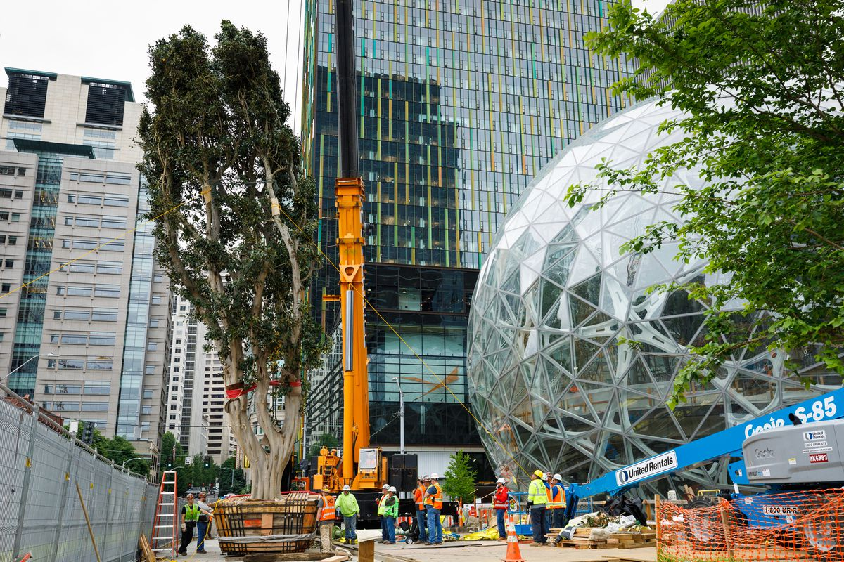 Watch a 55-foot ficus get lowered into the Amazon biospheres