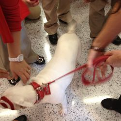 Bullseye greets the new staff