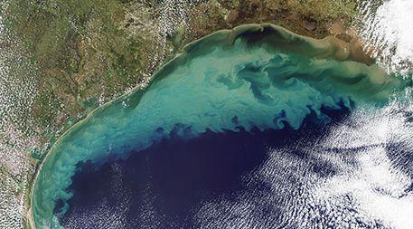Gulf of Mexico algae bloom