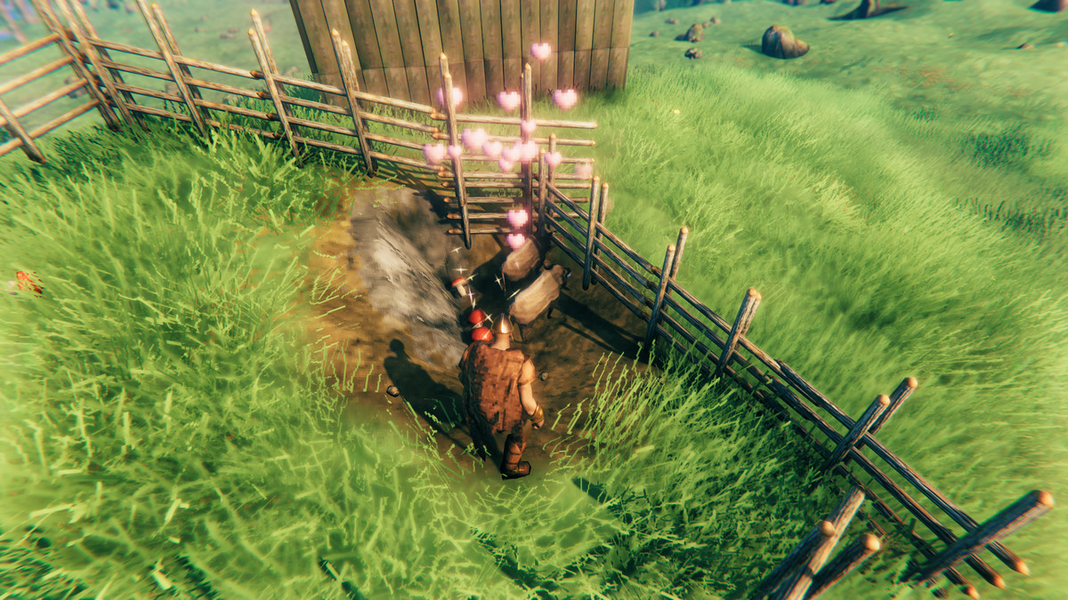 Two boars with hearts over their heads in Valheim