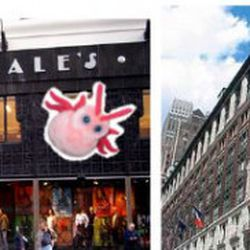 There are more bed bugs in the pictures above than Macy's and Bloomie's will admit finding in their stores.