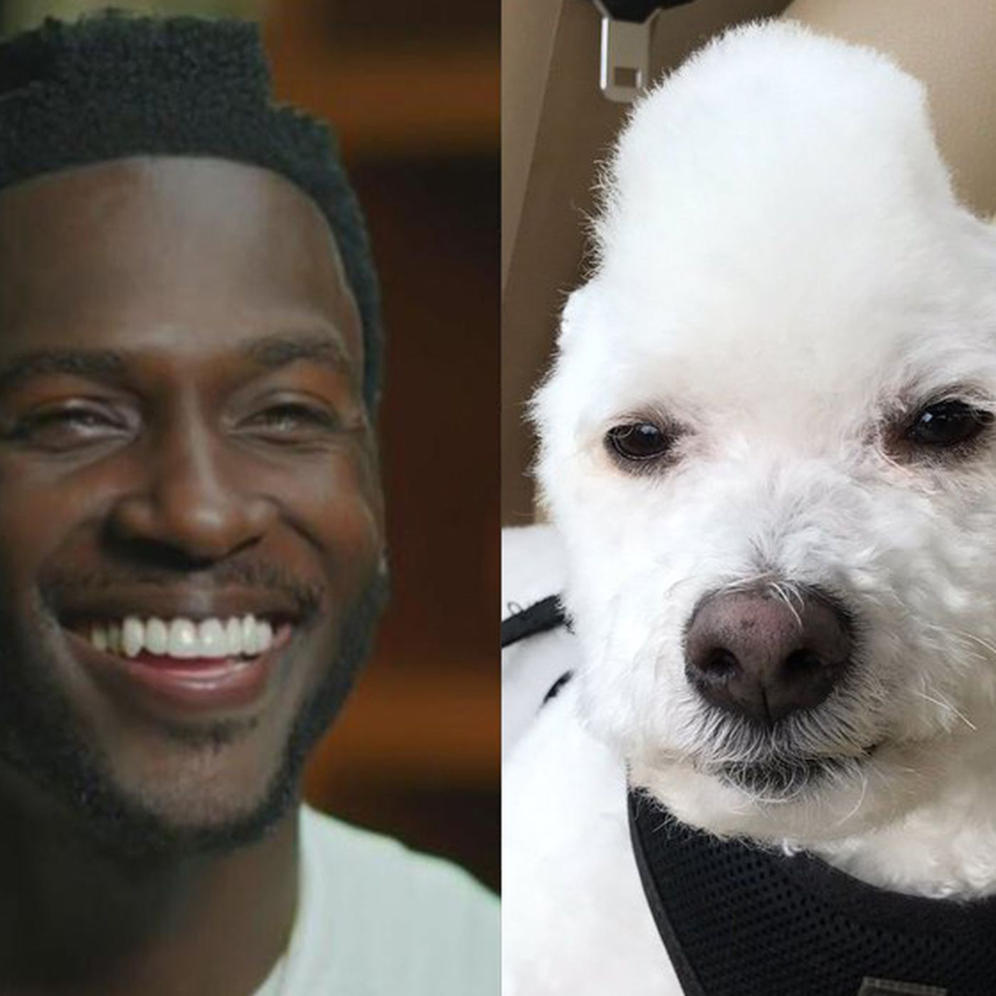 Antonio Brown Got A Big Kick Out Of This Dog That Stole His Haircut