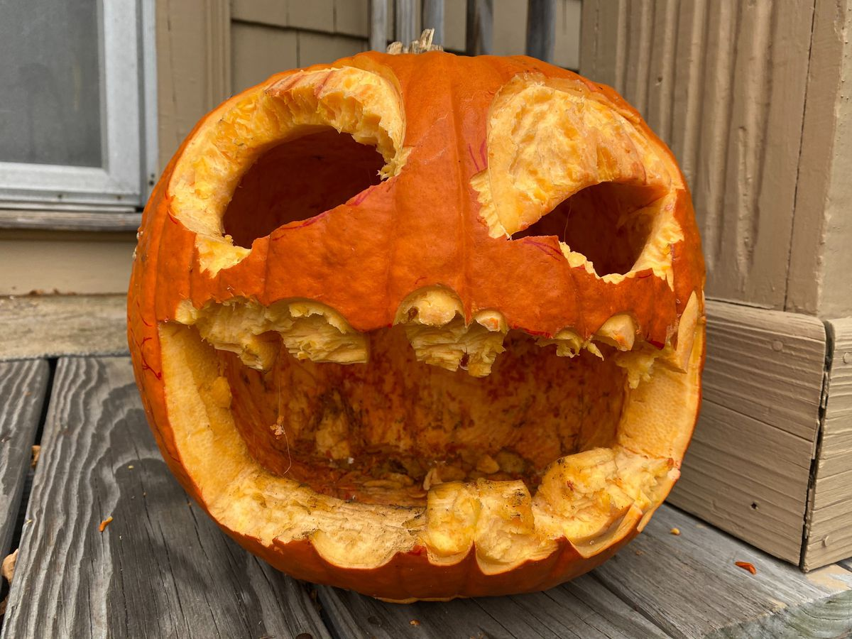 A pumpkin that's been eaten by squirrels
