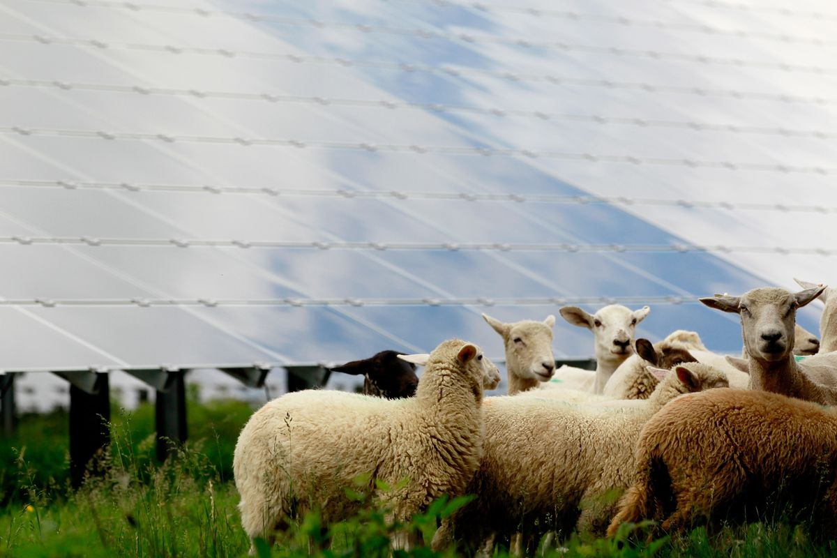 Solar CFs are nothing to be sheepish about.