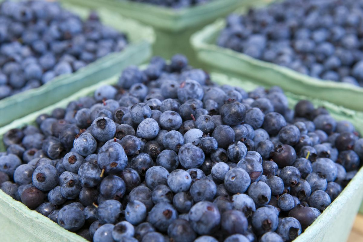 Anatomy of a Food Trend: Are Wild Maine Blueberries the ...