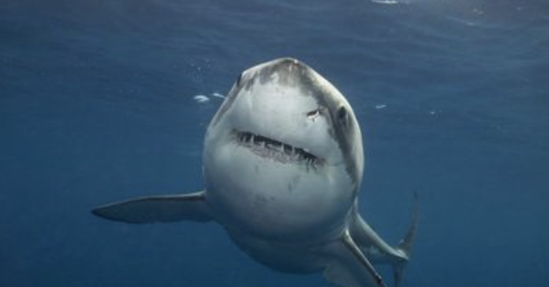 Discovery, home of Shark Week, enters the streaming wars with Discovery Plus
