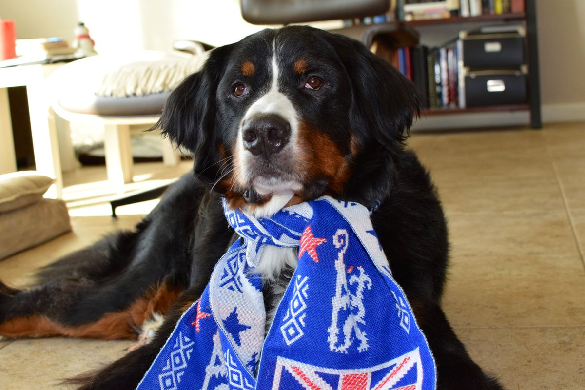 Chelsea's number one canine fan.