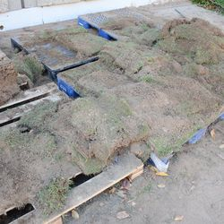 12:55 p.m. Example of the sod that was available -