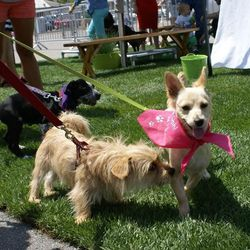 """<a href=""""http://www.pussyandpooch.com"""">Pussy and Pooch</a>'s dog park was perfect for four-pawed guests."""
