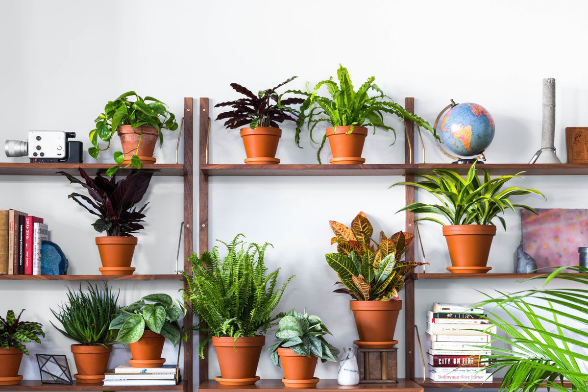 Buy indoor plants online at these stores curbed - Affordable interior design atlanta ...