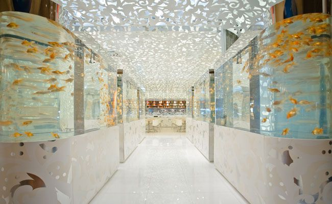 Rows of aquariums in a white room with lights overhead.