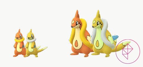 Shiny and regular Buizel and Floatzel. The Shiny variants are gold, rather than orange.