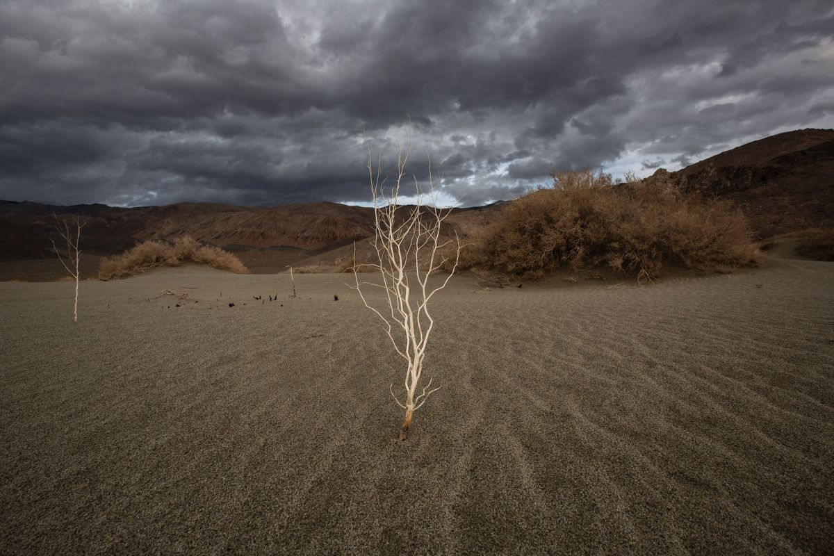 A plant stands over desert sands near Lone Pine, California.