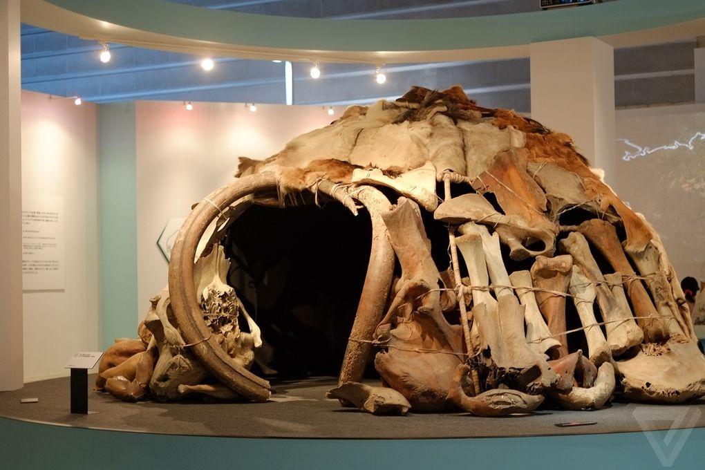 Meet Yuka The 39 000 Year Old Mummified Woolly Mammoth