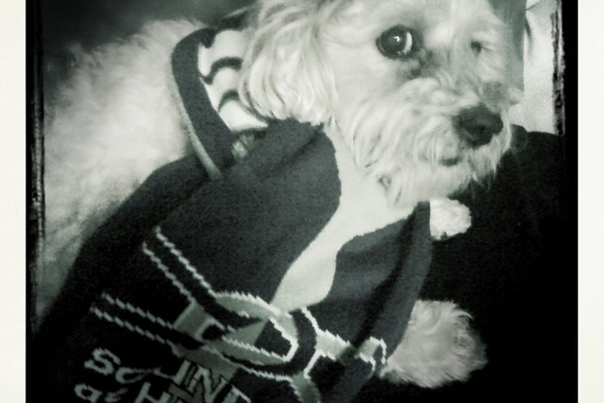 Yeah, this is Jeremiah's dog wearing his scarf. What? You know it's cute.