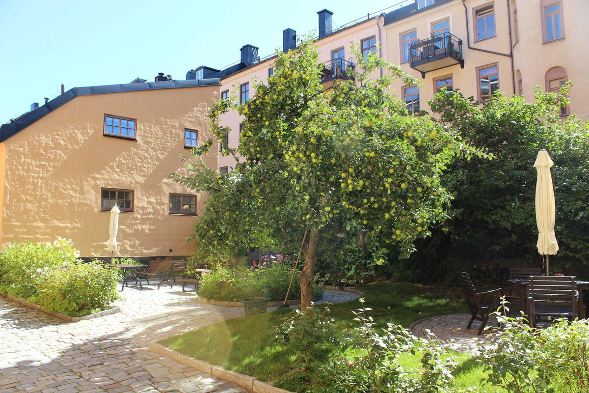 Courtyard with apple tree.