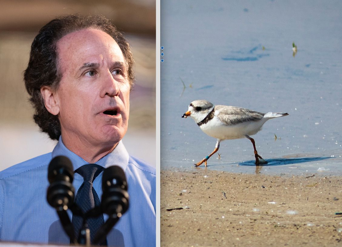 Jam Productions' Jerry Mickelson, left, in 2018. A piping plover walks in the area sectioned off for the endangered species on Montrose Beach last week.