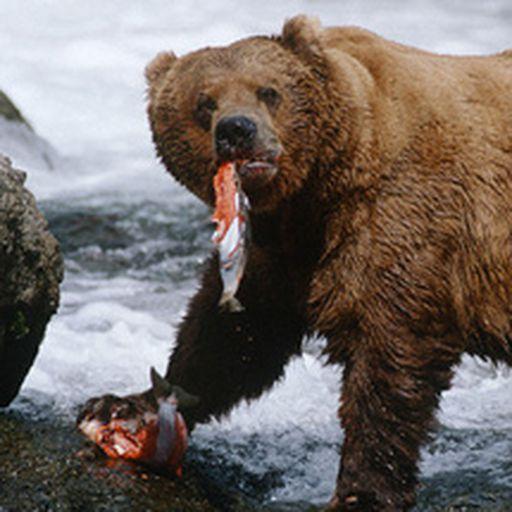 Rob Bear