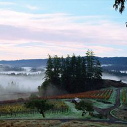 Peay Vineyards in the Sonoma Coast is famous for their Pinot Noir, but also makes some of the best cool climate Syrah in Sonoma. [source: Peay]