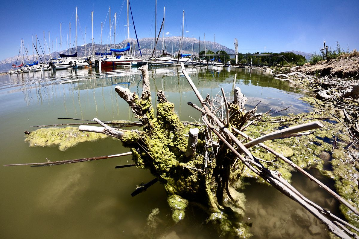 Moss clings to the shore as sailboats sit in their slips at Utah Lake's Lindon Marina on Tuesday, June 23, 2020. The Utah Lake Commission and partners are pilot-testing two different treatments for algae at the lake. Lindon Marina and Lincoln Beach marina will both undergo treatments this summer. Both locations will be accessible for recreation use and the difference in water quality will be noticeable.