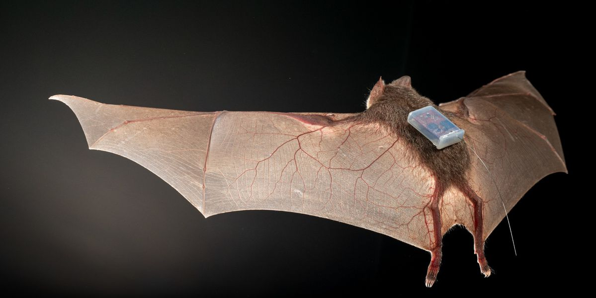 Image of article 'Today I learned bats are trendsetters in tracking tech'