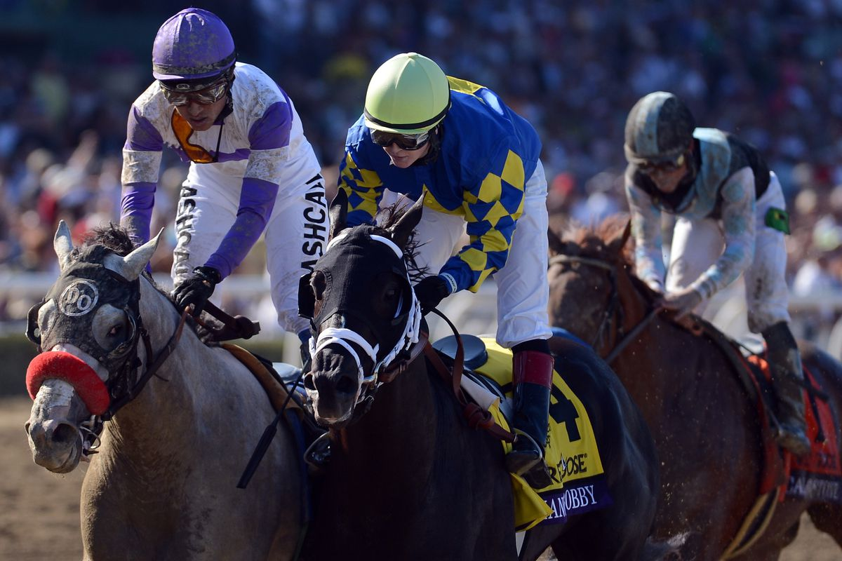 He's Had Enough (left) finishing second to Shanghai Bobby in the 2012 Breeders' Cup Juvenile.