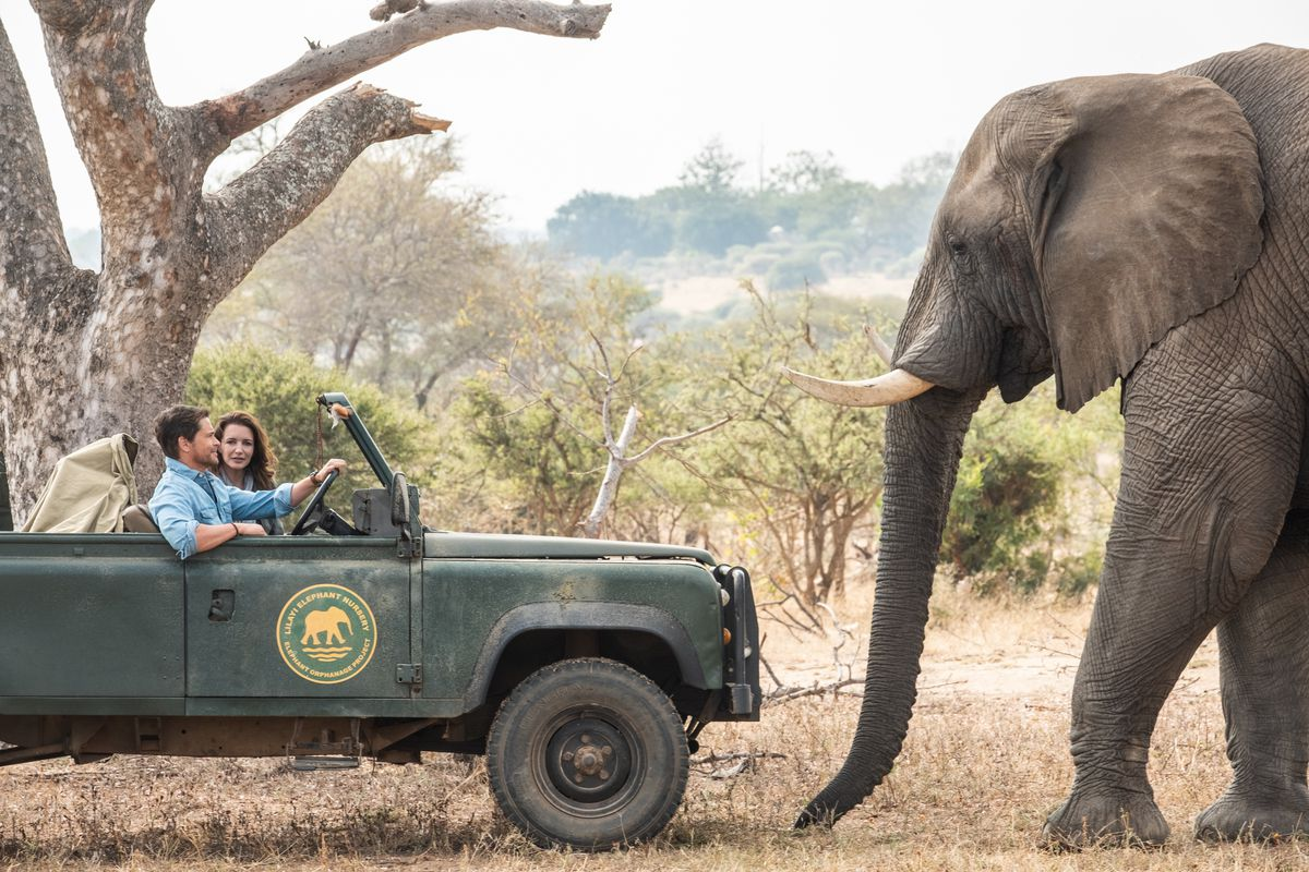 Rob Lowe and Kristin Davis ride in a jeep and see an elephant in Holiday in the Wild