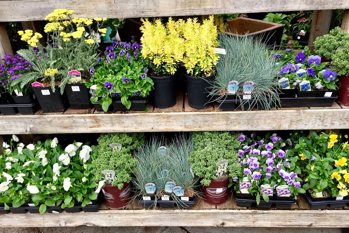 Two rows of plants on wooden shelves