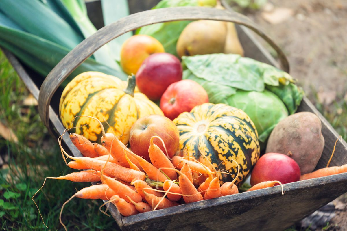 A basket full of vegetables straight from an autumnal garden.
